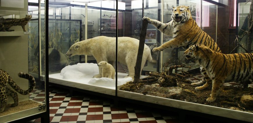 Foyer Museum Zoo : The zoological museum of moscow university museeum